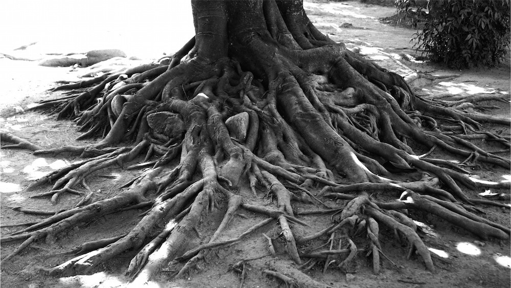roots of agility