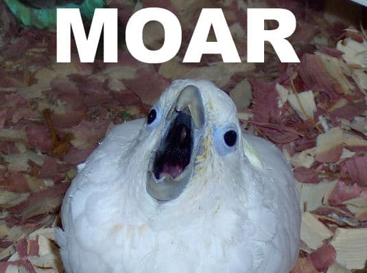 MOAR meme with bird